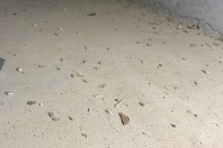 シロアリ防虫工事施工前の写真